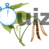 Quiz La graine