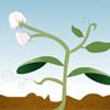 Bitki yaşam döngüsü